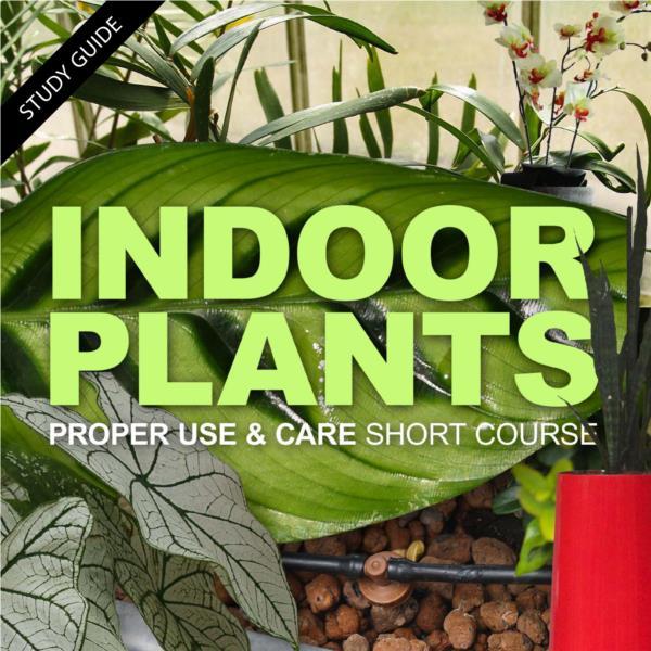 Indoor Plants- Short Course